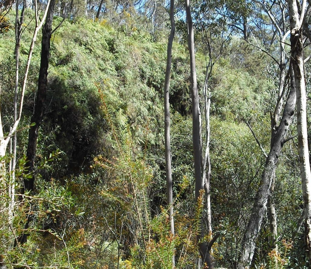 Spectacular hanging swamp, South Lawson Park