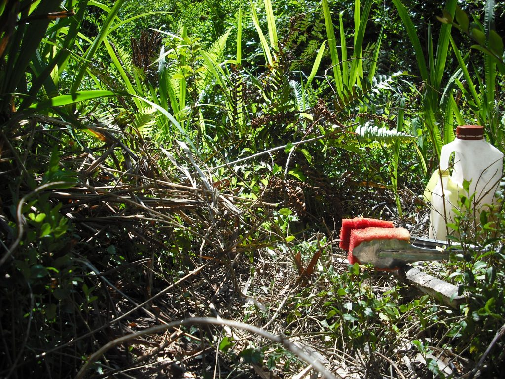 Carefully wiping the long green Montbretia weed with herbicide and avoiding the ferns, October 2016