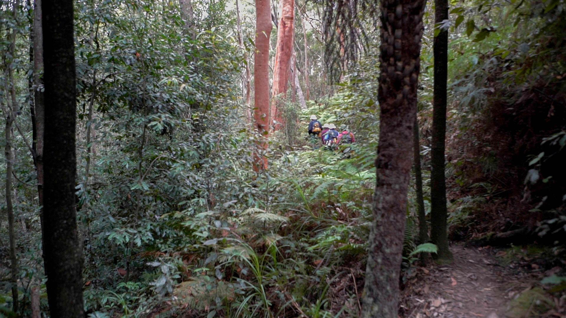 Lush riparian vegetation Lawson Creek Photo: V Hong