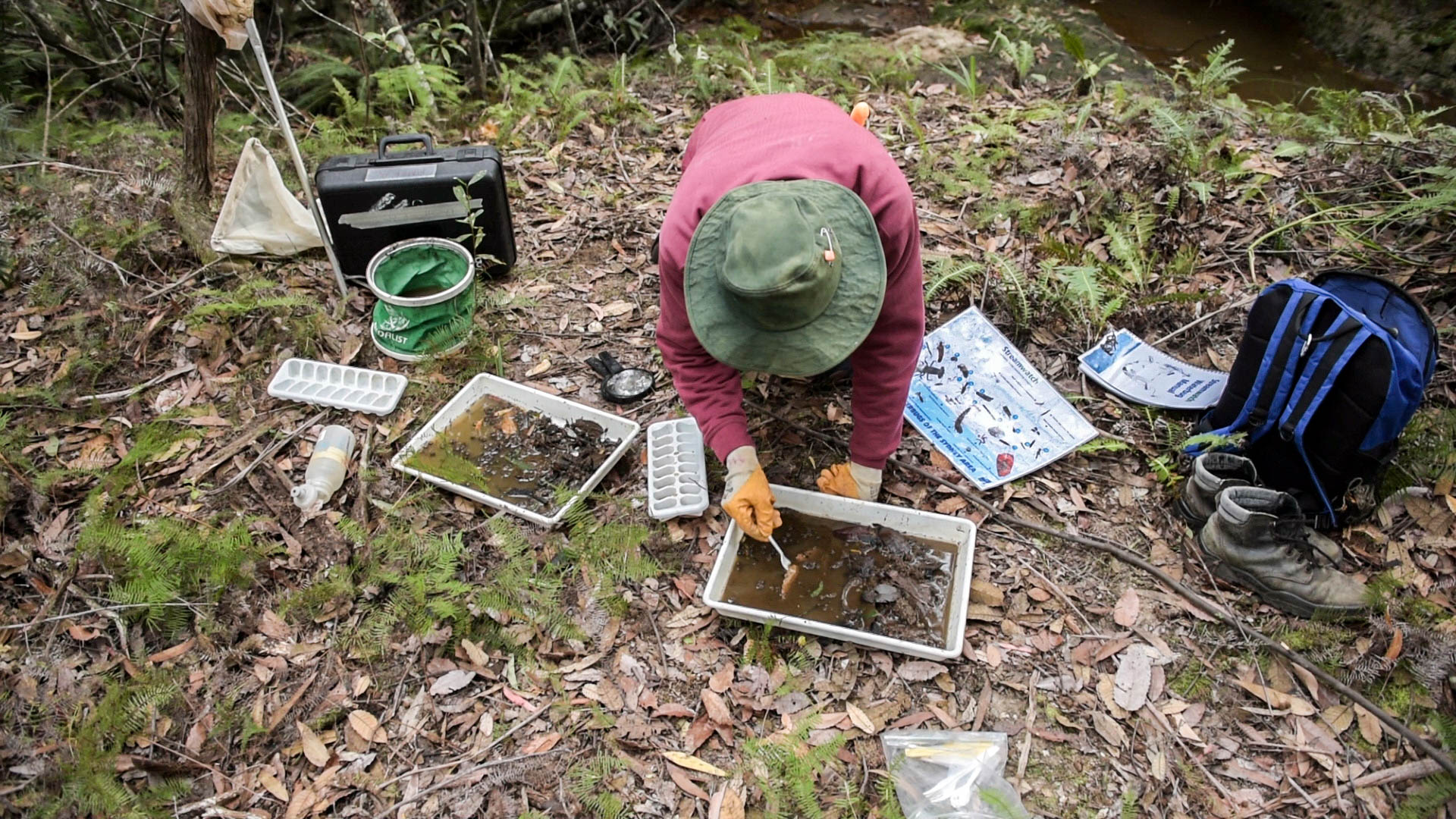 Analysing macroinvertebrates Photo: V Hong