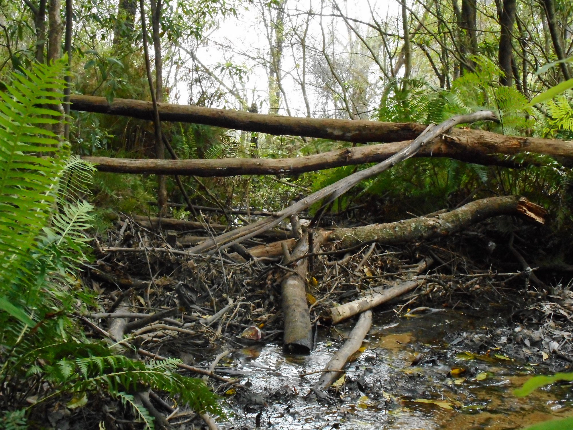 Natural debris, good bug habitat, Lawson Creek, October 2018